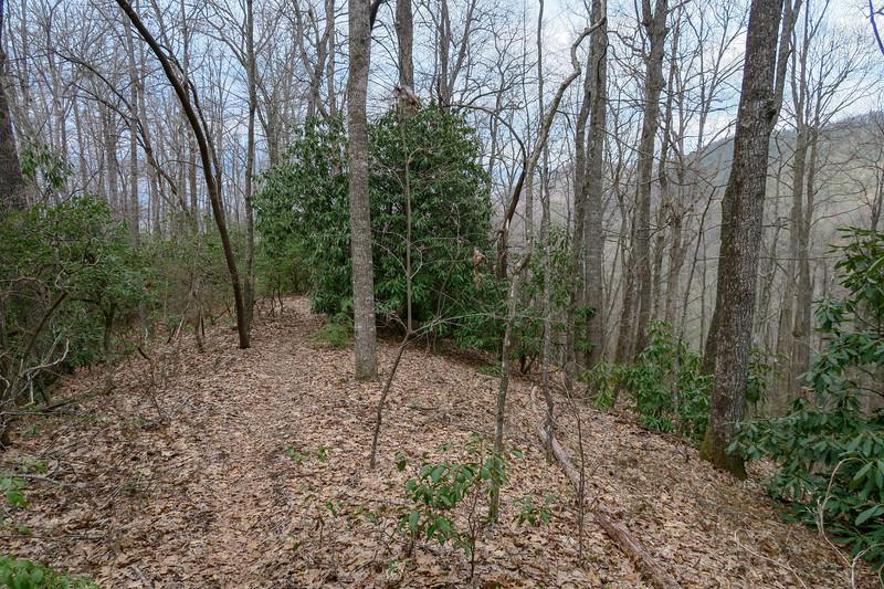 Vineyard Gap Trail -- 2,700'