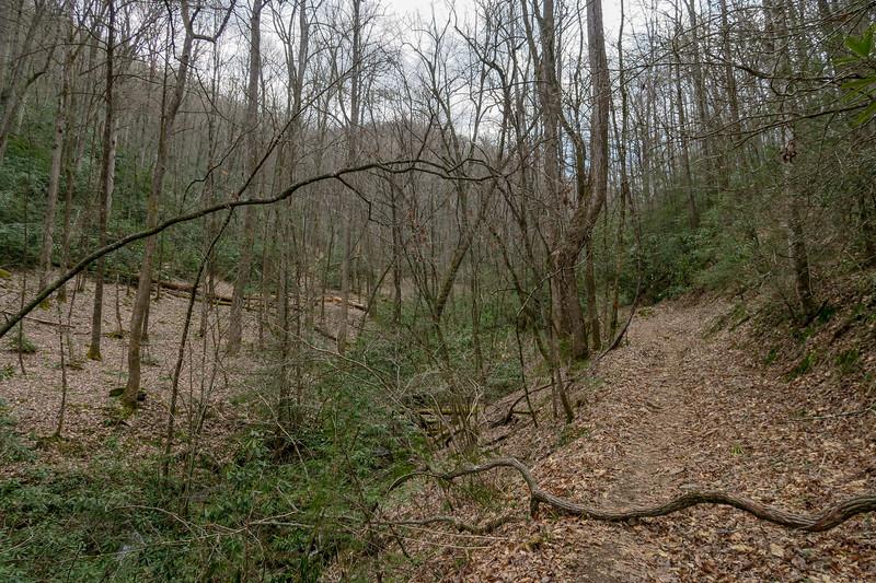 Bradley Creek Trail -- 2,450'