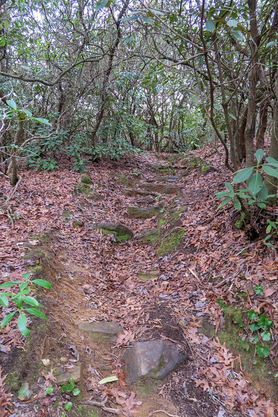 Vineyard Gap Trail -- 2,500'