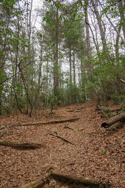 Vineyard Gap Trail -- 2,730'