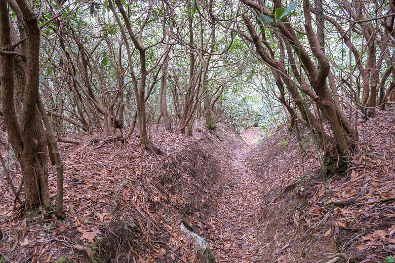 Vineyard Gap Trail -- 2,320'