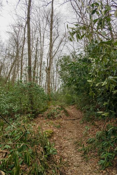 Bradley Creek Trail -- 2,570'