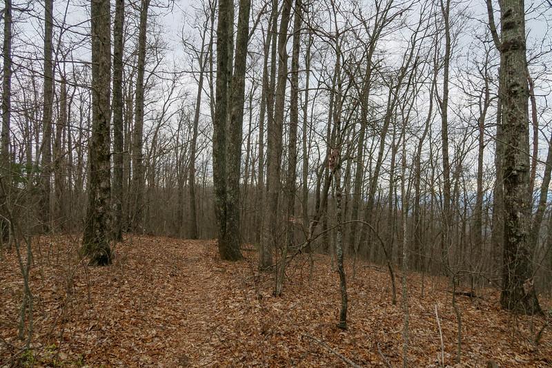 Vineyard Gap Trail -- 2,980'