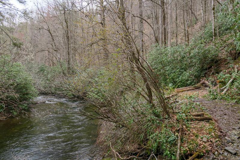 Bradley Creek Trail -- 2,390'