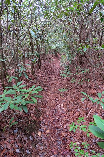 Vineyard Gap Trail -- 2,350'