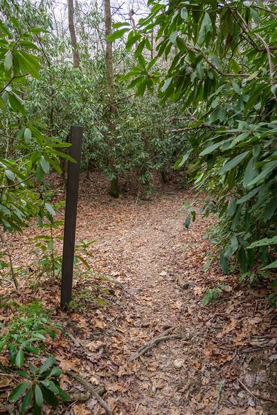 Bradley Creek-Riverside Trail West Junction -- 2,390'
