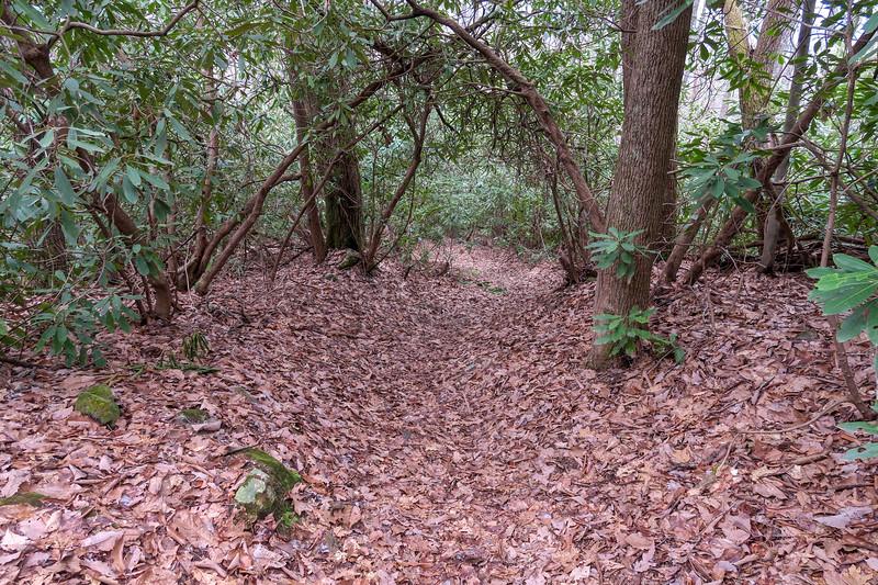 Vineyard Gap Trail -- 2,750'