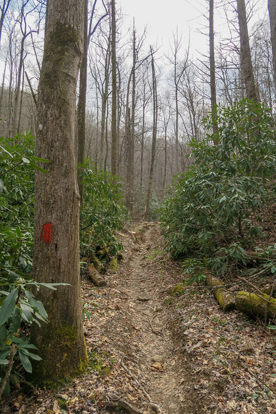 Bradley Creek Trail -- 2,370'
