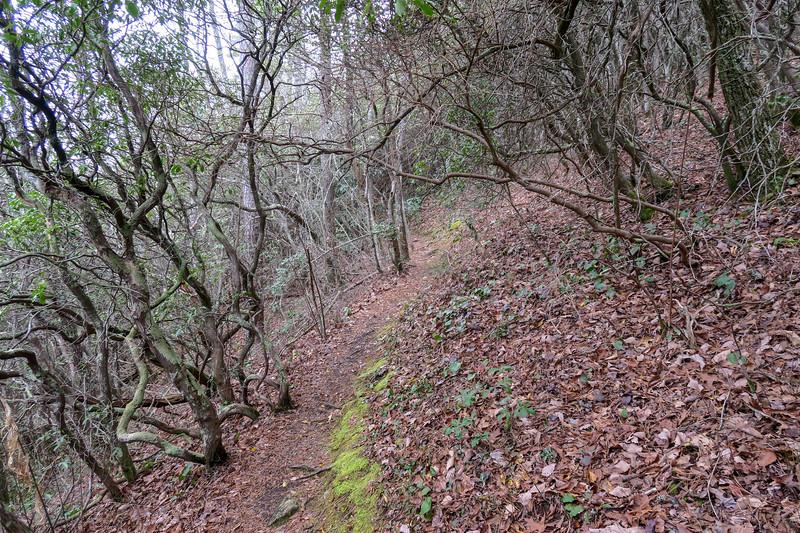 Vineyard Gap Trail -- 2,870'