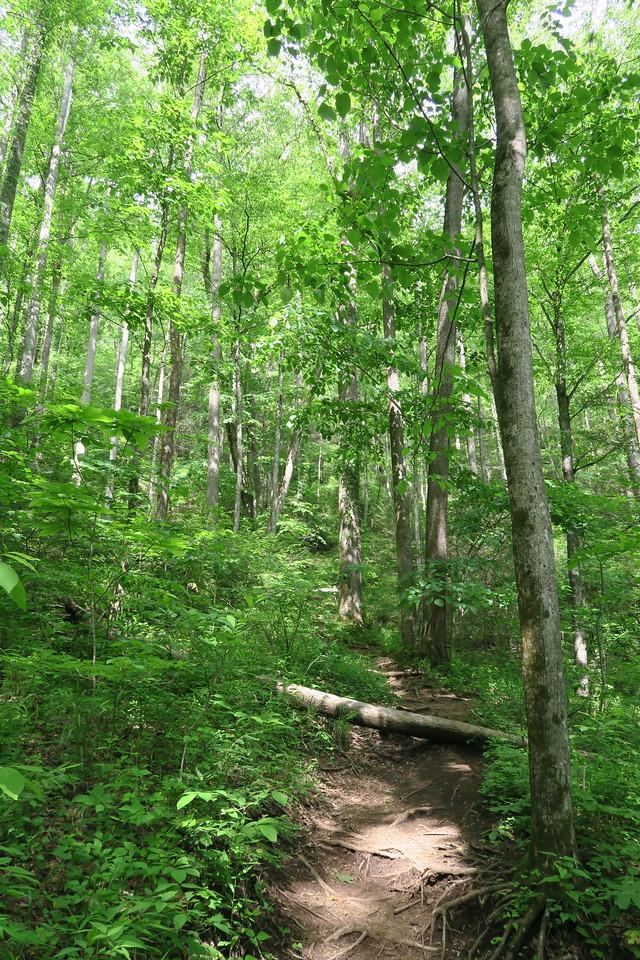 Slick Rock Falls Trail