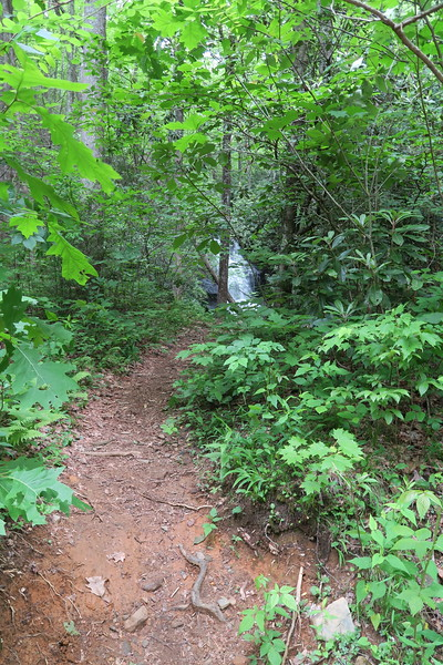 Log Hollow Falls Path