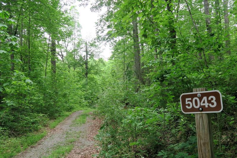 Forest Road 475-B Trailhead