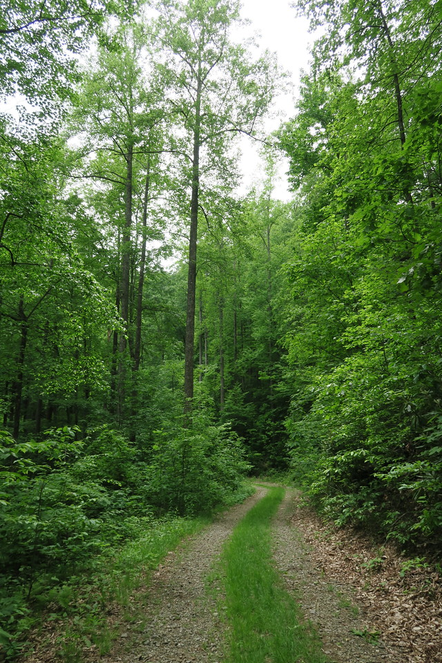 Forest Road 5043