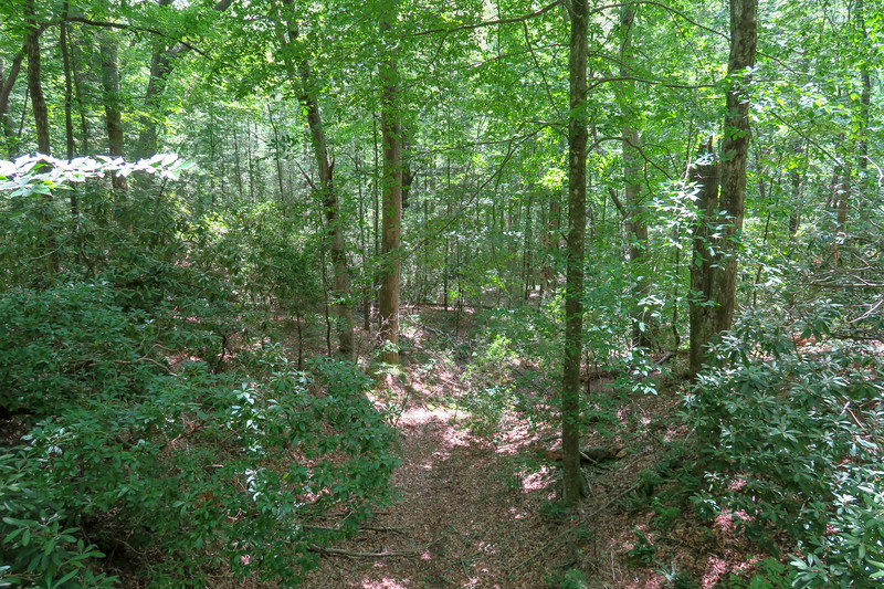 Andy Cove Nature Trail -- 2,230'