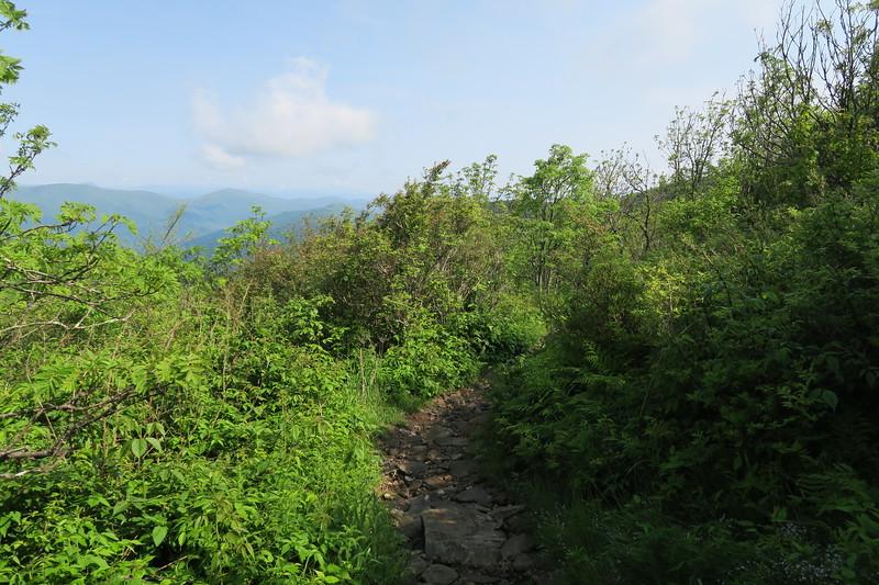 Art Loeb Spur Trail -- 5,920'