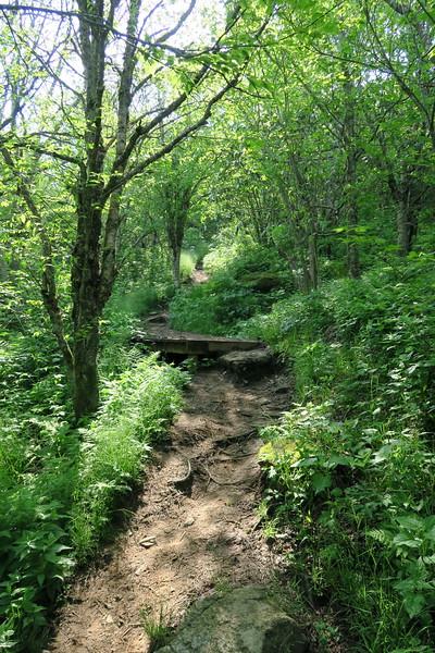Art Loeb Spur Trail -- 5,850'