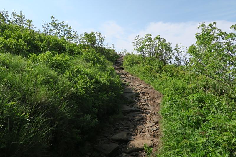 Art Loeb Spur Trail -- 5,960'
