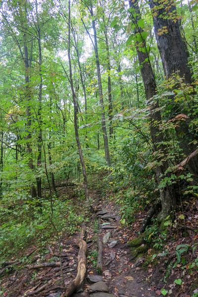 Art Loeb Trail -- 3,650'