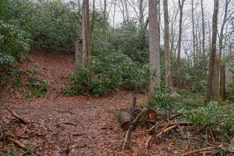 Avery Creek/Buckhorn Gap Trail Lower Junction -- 2,560'