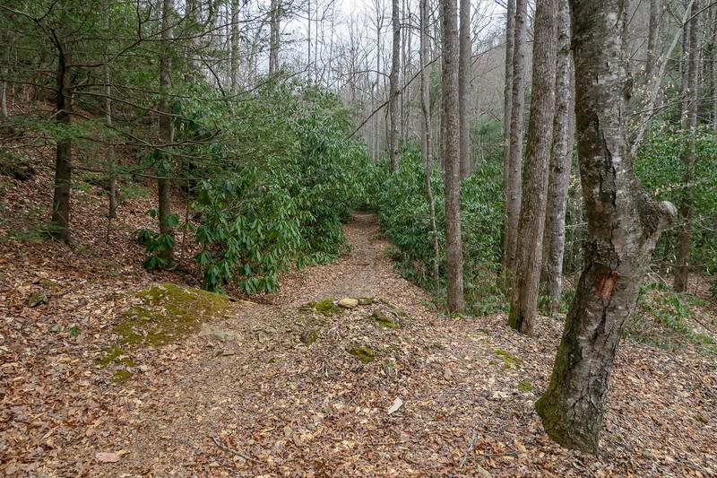 Bad Fork Trailhead @ Wash Creek Road -- 2,460'