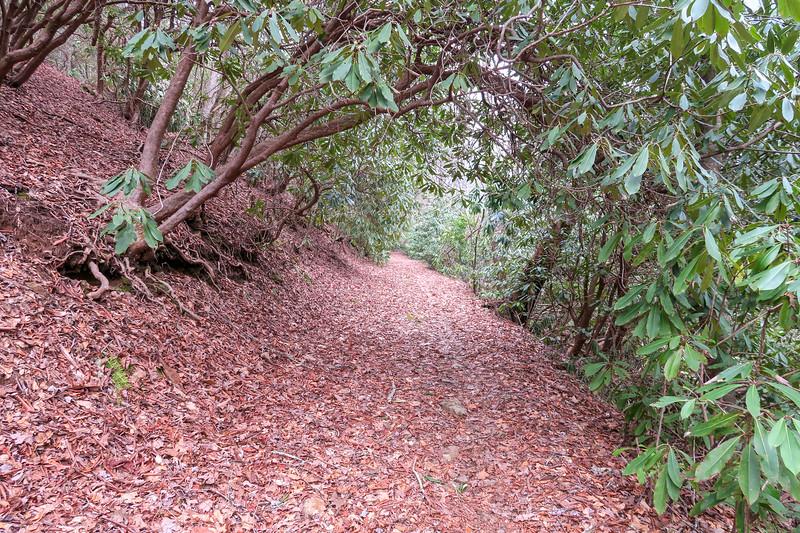 Bad Fork Trail -- 2,500'