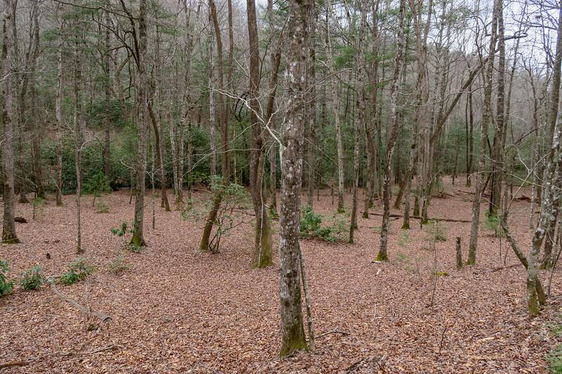 Bad Fork Trail -- 2,560'