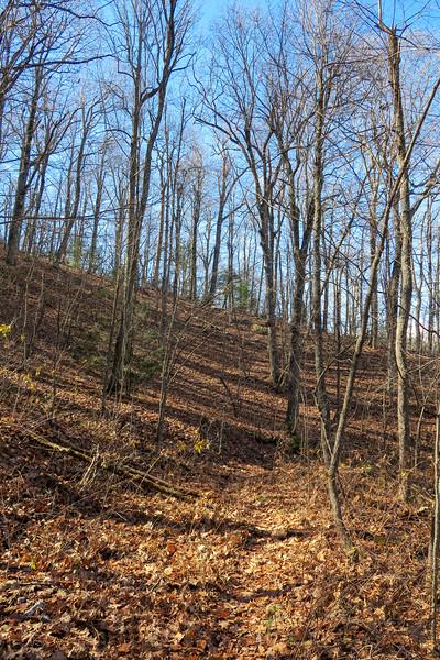 Barnett Branch Trail -- 3,700'