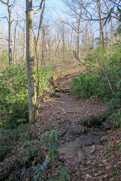 Barnett Branch Trail -- 3,640'