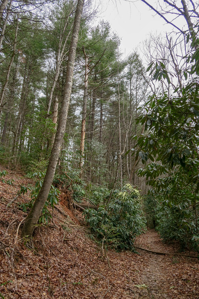 Bear Branch Trail -- 2,480'