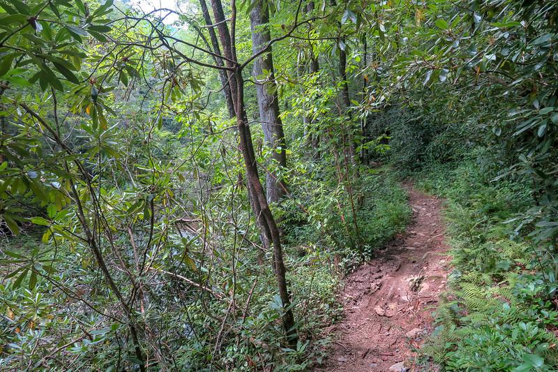 Big Creek Trail -- 2,450'