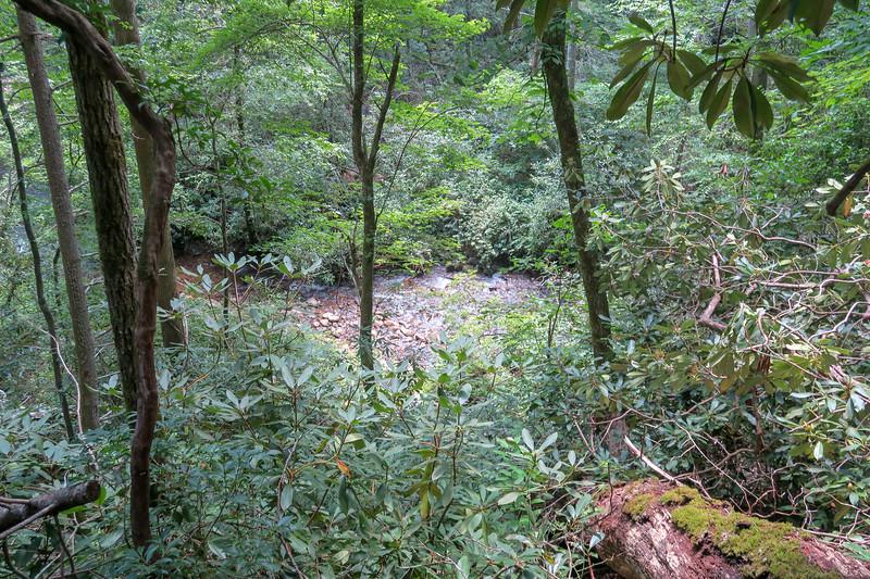 Big Creek Trail -- 2,500'