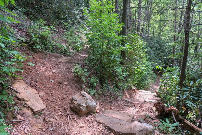 Big Creek/Spencer Branch Trail Junction -- 2,480'