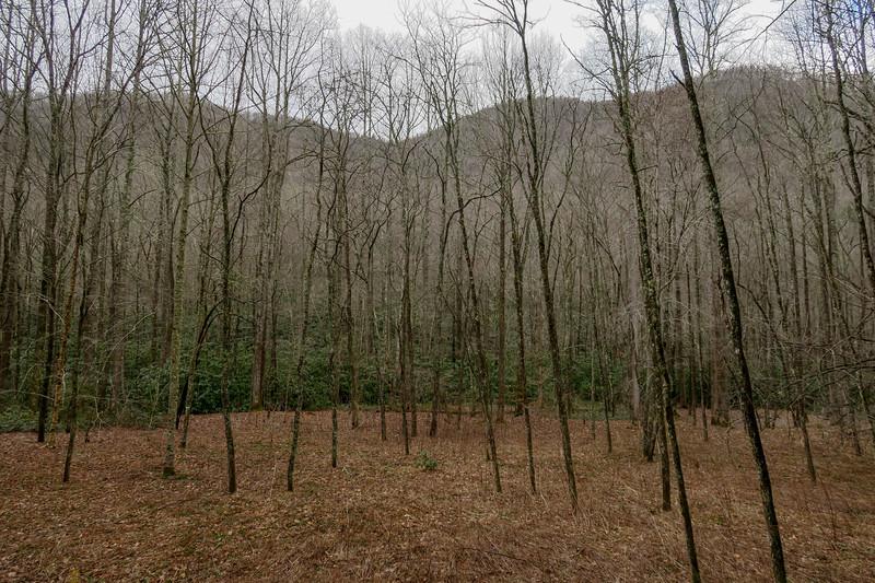 Big East Fork Trail -- 3,380'