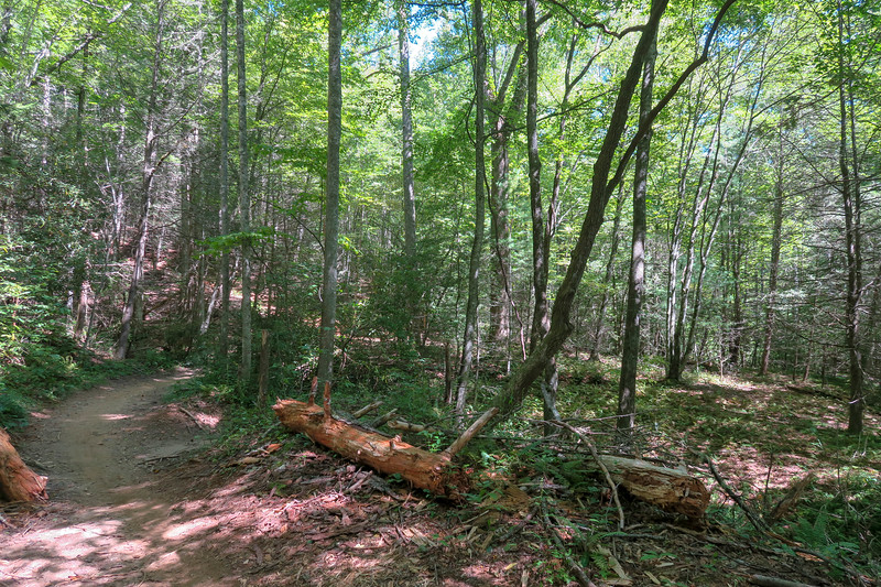 Black Mountain Trail -- 2,800'