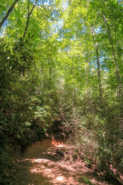 Black Mountain Trail -- 2,450'