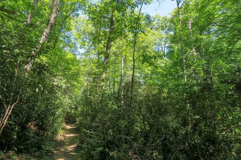 Black Mountain Trail -- 2,650'
