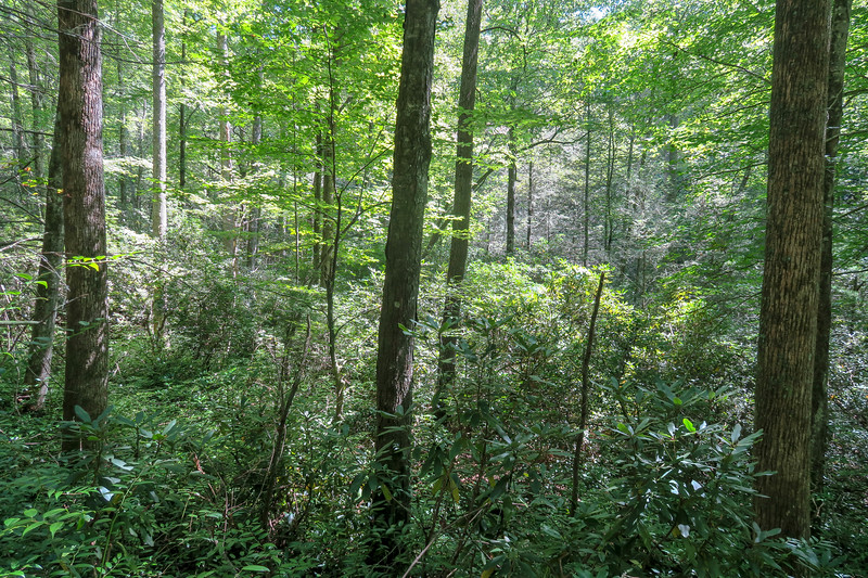 Black Mountain Trail -- 2,750'