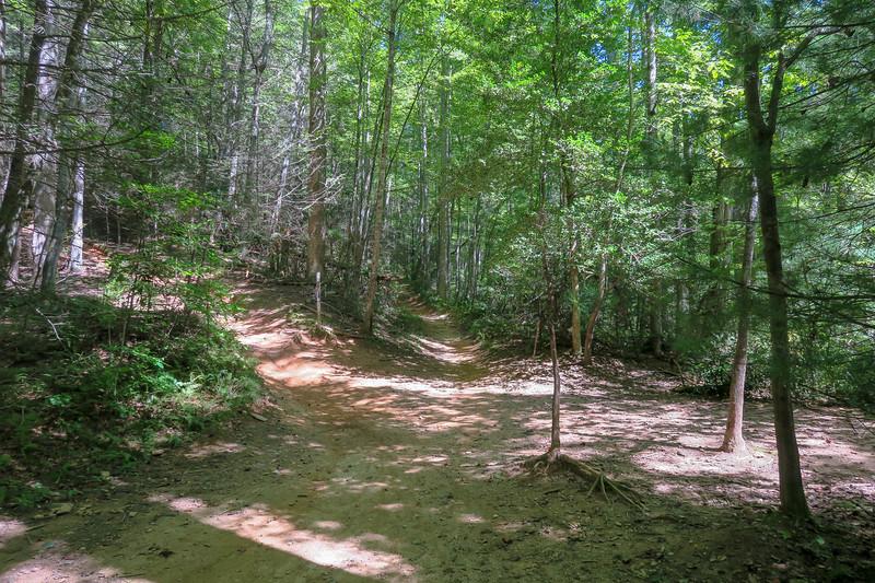 Black Mountain/Thrift Cove Trail Upper Junction -- 2,820'