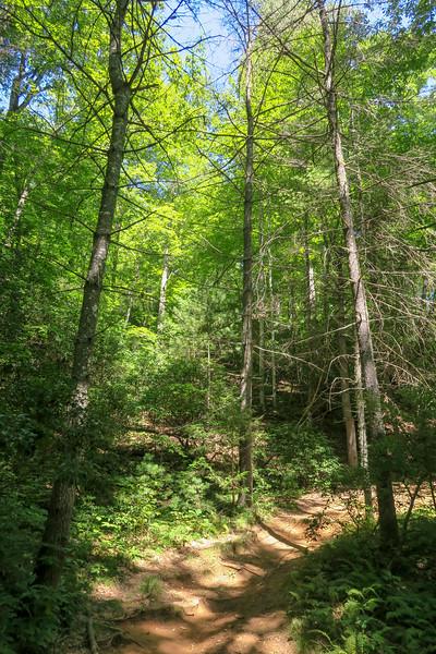 Black Mountain Trail -- 2,900'