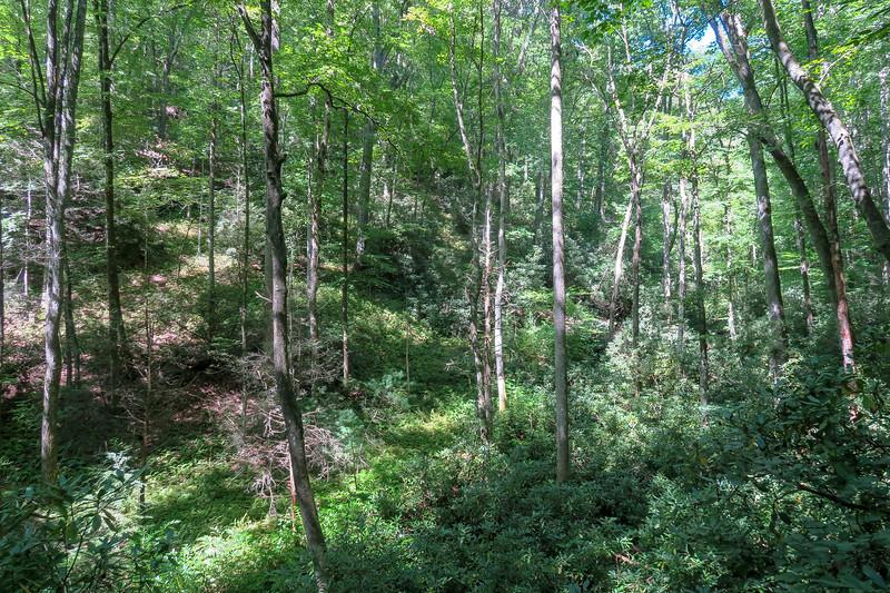 Black Mountain Trail -- 2,320'