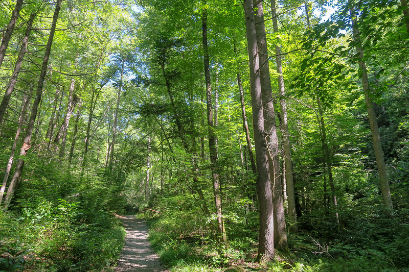 Black Mountain Trail -- 2,200'