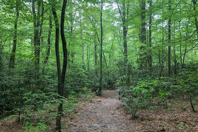 Boyd Branch Trail -- 2,360'