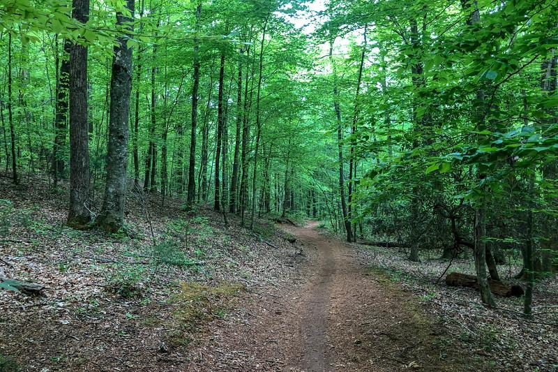 Boyd Branch Trail -- 2,330'