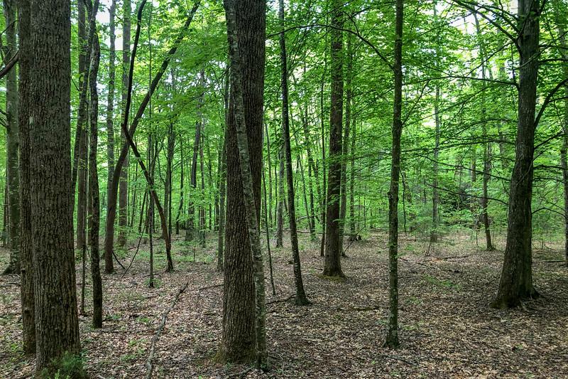 Boyd Branch Trail -- 2,320'