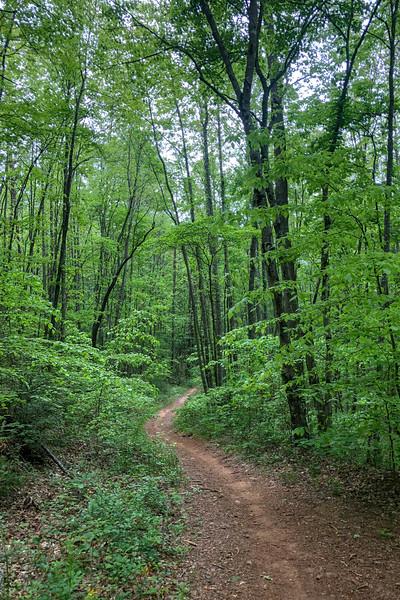 Boyd Branch Trail -- 2,300'