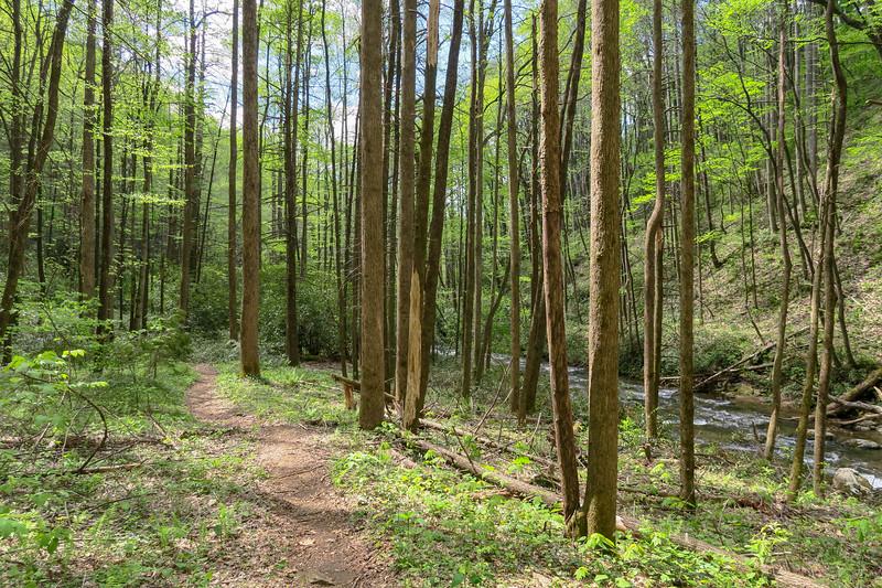 Bradley Creek Trail -- 2,650'