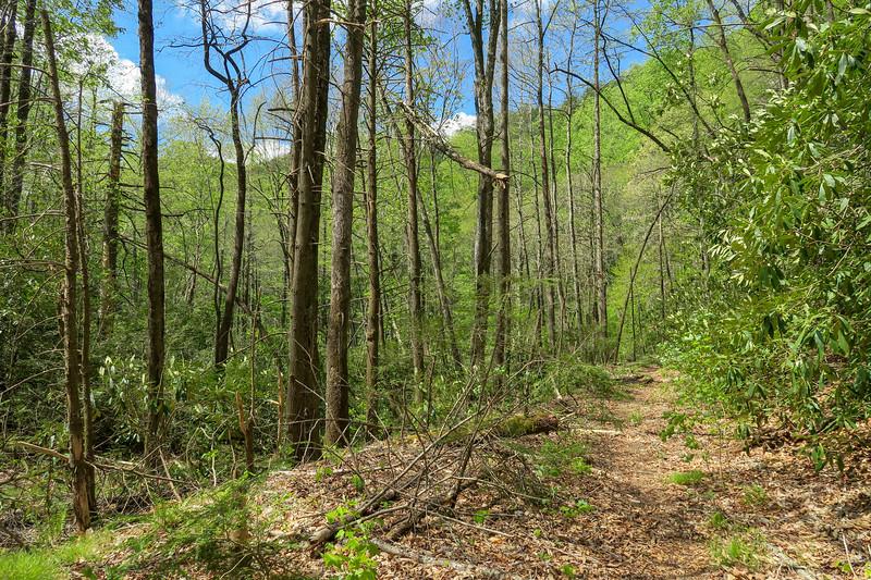 Bradley Creek Trail -- 2,610'