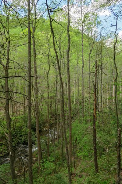 Bradley Creek Trail -- 2,700'