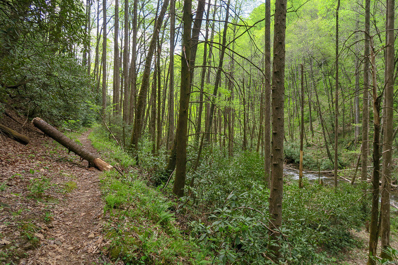 Bradley Creek Trail -- 2,660'
