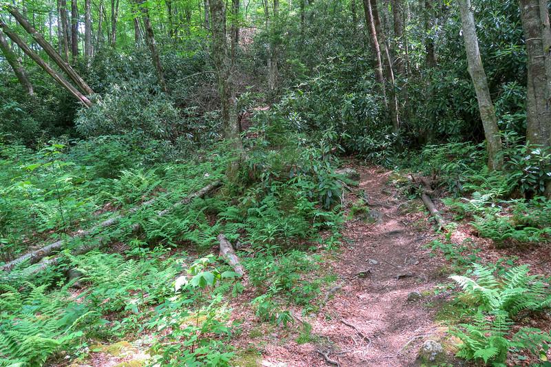 Bridges Camp Gap/Big East Fork/Greasy Cove Trail Junction -- 3,960'